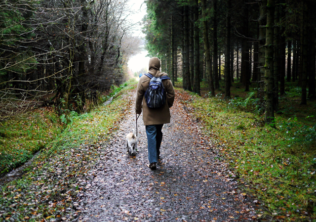 walking_in_woodburn_forest_-_geograph-org-uk_-_1585127